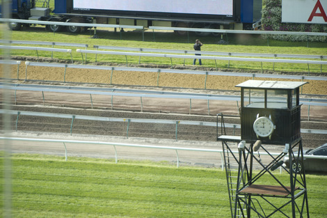 Longines Flat Racing Event: Longines day of Racing Elegance: Longines Mackinnon Stakes, Derby Day 3rd November 2012